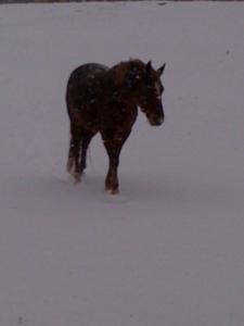 webster in snow