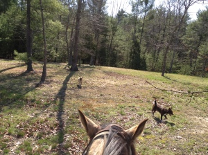 riding with dogs